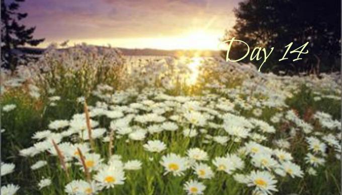 COG Devotion #14, Daisys