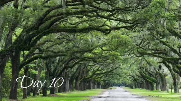 oakandroad-day10