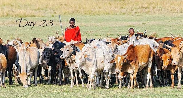 Maasaiandcows-day23