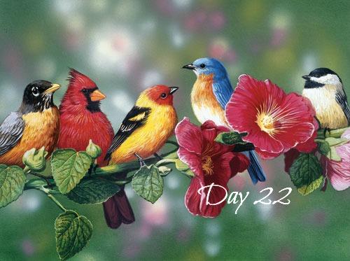 songbirds-day22