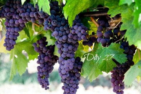 vineandgrapes-day27