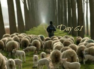 shepherd-day61